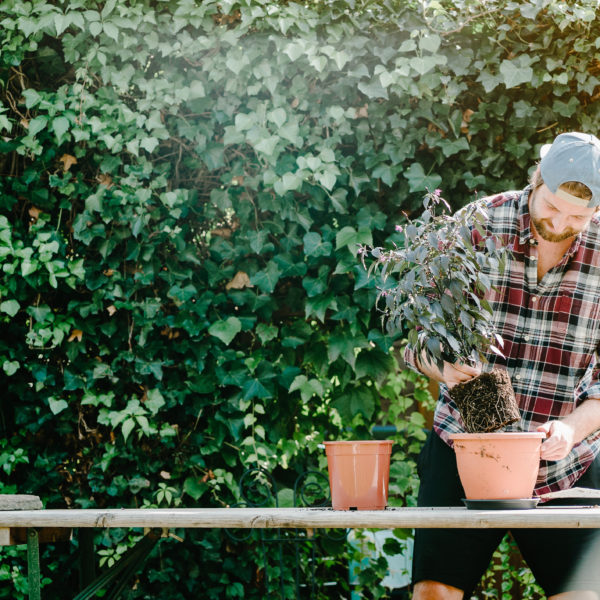 Pflanzen Umtopfen - Mann pflanzt Blumen ein