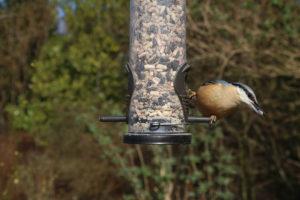 Vogelhaus-Futter - Wintervögel